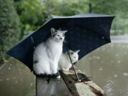 cat-rain